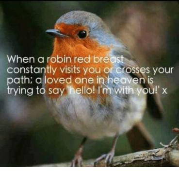 when-a-robin-red-breast-constantly-visits-you-or-grosses-4074124